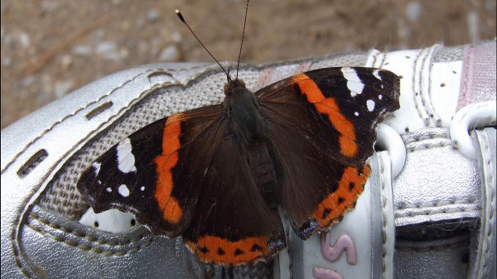Meglio un fungo o una farfalla? Chiedetelo agli atleti